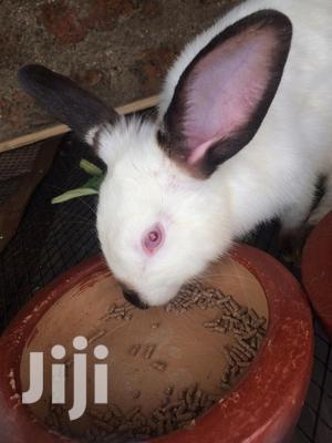 Rabbits For Sale | Livestock & Poultry for sale in Kisumu Central, Migosi
