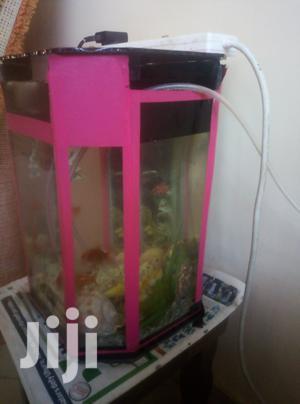 Complete Aquarium | Fish for sale in Nairobi, Donholm