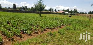 Prime Plots for Sale in Illula Eldoret   Land & Plots For Sale for sale in Turbo, Ngenyilel