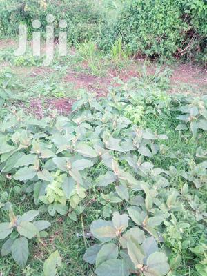 1.1 Acres Plot in Kilimani Yaya for Lease   Land & Plots for Rent for sale in Nairobi, Kilimani