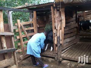 Dairy Farm Hand | Farming & Veterinary Jobs for sale in Nyeri, Mukurwe-Ini West