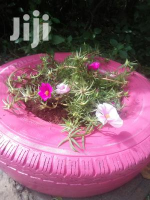 Flower, Ground Cover, Potted Plant /Flowers + Free Transport   Garden for sale in Nairobi, Embakasi