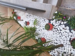 Landscaping,Potted Flowers N Maintaining   Landscaping & Gardening Services for sale in Nairobi, Karen