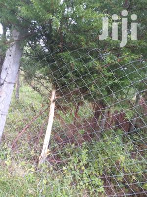 Prime 7 Acres Of Land In Olkalou With 5000 Cypress Trees | Land & Plots For Sale for sale in Nyandarua, Wanjohi