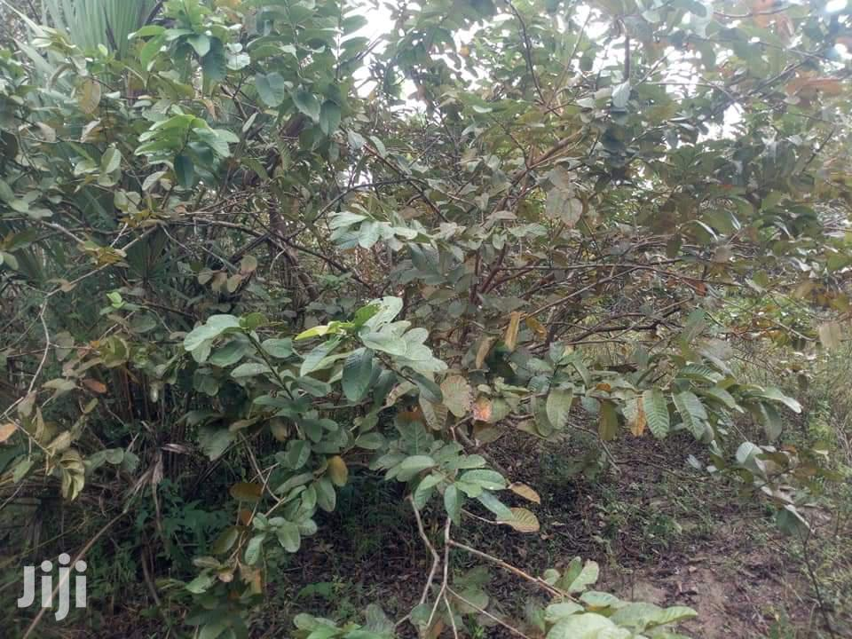 14acres for Sale | Land & Plots For Sale for sale in Dzombo, Kwale, Kenya