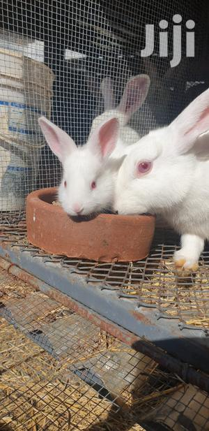 1-3 Month Female Mixed Breed Cat | Livestock & Poultry for sale in Machakos, Syokimau