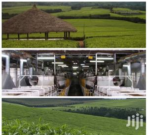 Tea Estate/Company For Sale 7,000 Acres | Commercial Property For Sale for sale in Kericho, Soin (Sigowet)