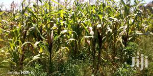 Mixed Land for Farming   Land & Plots For Sale for sale in Nyandarua, Central Ndaragwa