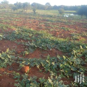 Prime Land for Sale in Matuu 2.5acres With Watermelons | Land & Plots For Sale for sale in Yatta, Matuu