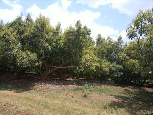 609acres For Sale | Land & Plots For Sale for sale in Murang'a, Makuyu