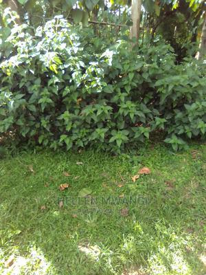 Gardener and Caretaker in Homestead | Gardening & Landscaping CVs for sale in Nairobi, Kahawa West