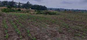 4 Acres Kabuchai | Land & Plots For Sale for sale in Bungoma, Kabuchai/Chwele