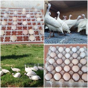 Fertile Pure White Guineafowl Eggs Available | Meals & Drinks for sale in Kiambu, Kikuyu