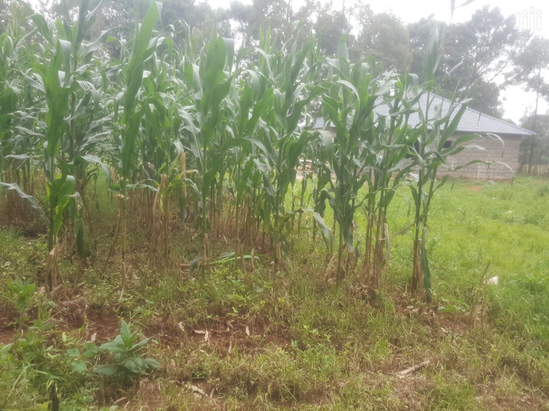 1/4 Plot for Sale in Kuinet Eldoret | Land & Plots For Sale for sale in Eldoret CBD, Uasin Gishu, Kenya