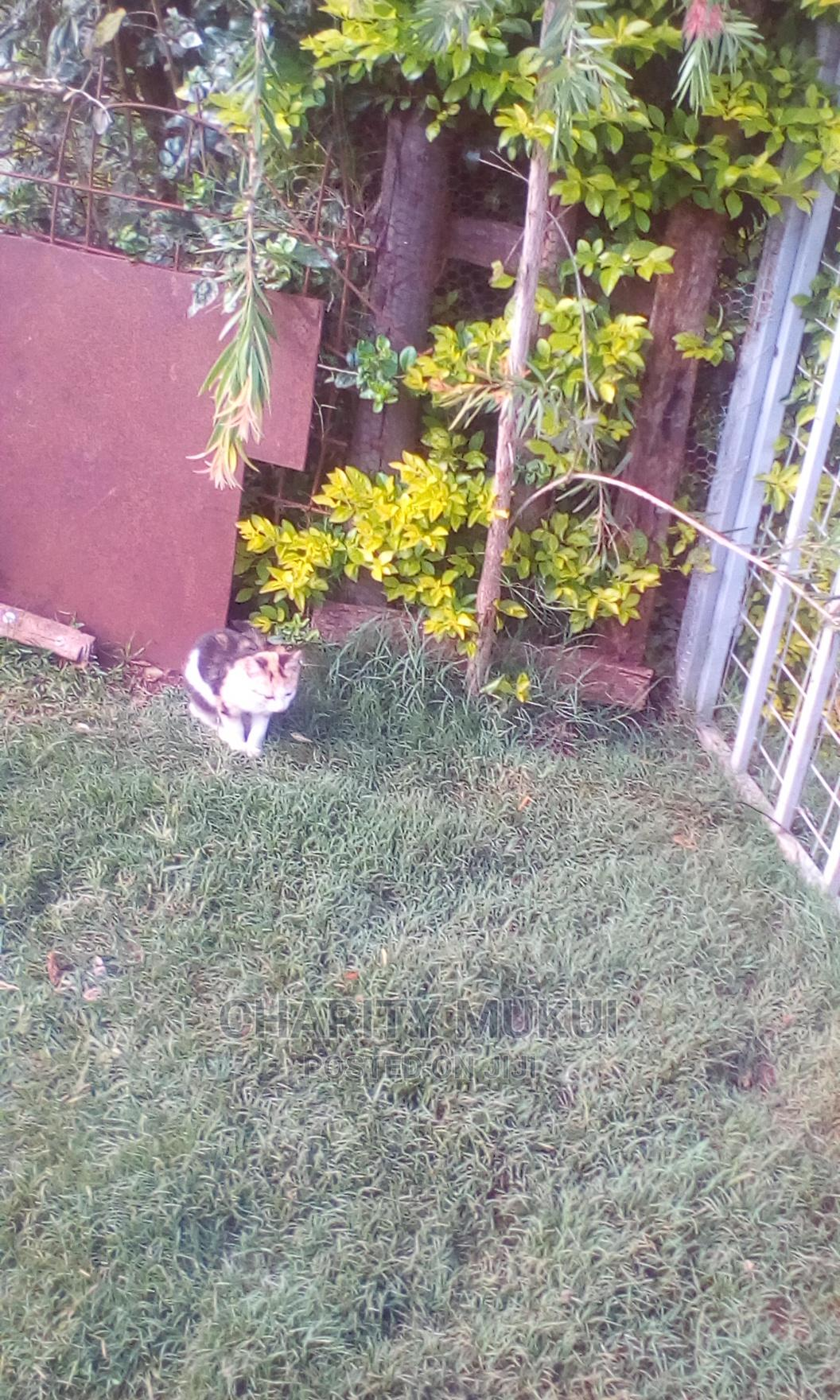 Archive: 6-12 Month Female Mixed Breed Persian