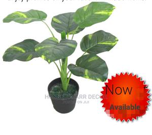 Plants for Decor   Home Accessories for sale in Nairobi, Nairobi Central