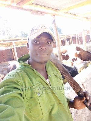 Shamba Boy | Farming & Veterinary CVs for sale in Nairobi, Nairobi West