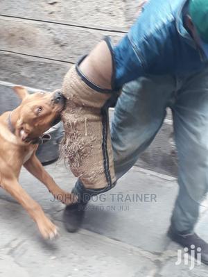 Dog Trainer   Pet Services for sale in Nairobi, Karen