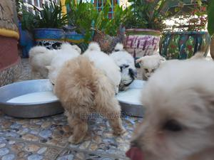 1-3 Month Female Mixed Breed Japanese Spitz | Dogs & Puppies for sale in Nakuru, Lanet