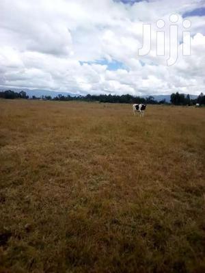16 Acres In Kinangop Njabini  | Land & Plots For Sale for sale in Nyandarua, NjabiniKiburu