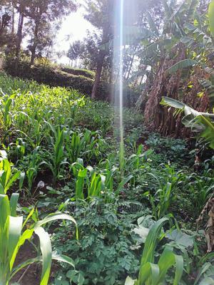 Residential 1⁄4 Plot for Sale in Marura Eldoret | Land & Plots For Sale for sale in Moiben, Kimumu