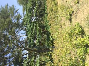 An Outstanding Piece Of Land For Long Term Lease | Land & Plots for Rent for sale in Narok, Mara