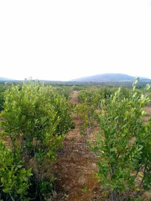 2.5acres for Sale Nanyuki | Land & Plots For Sale for sale in Laikipia East, Umande