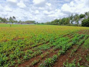 Several 1⁄4 Plots for Sale in Kaptuli Eldoret   Land & Plots For Sale for sale in Uasin Gishu, Eldoret CBD