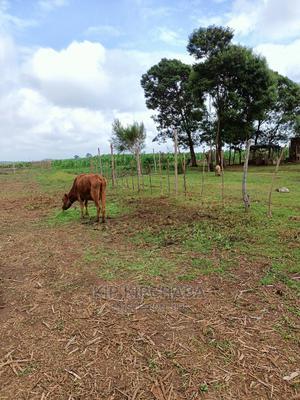Plots for Sale in Illula Near Koilel River in Eldoret   Land & Plots For Sale for sale in Uasin Gishu, Eldoret CBD