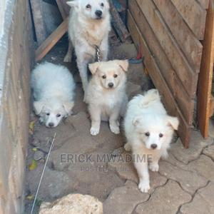 3-6 Month Female Mixed Breed Japanese Spitz | Dogs & Puppies for sale in Mombasa, Bamburi