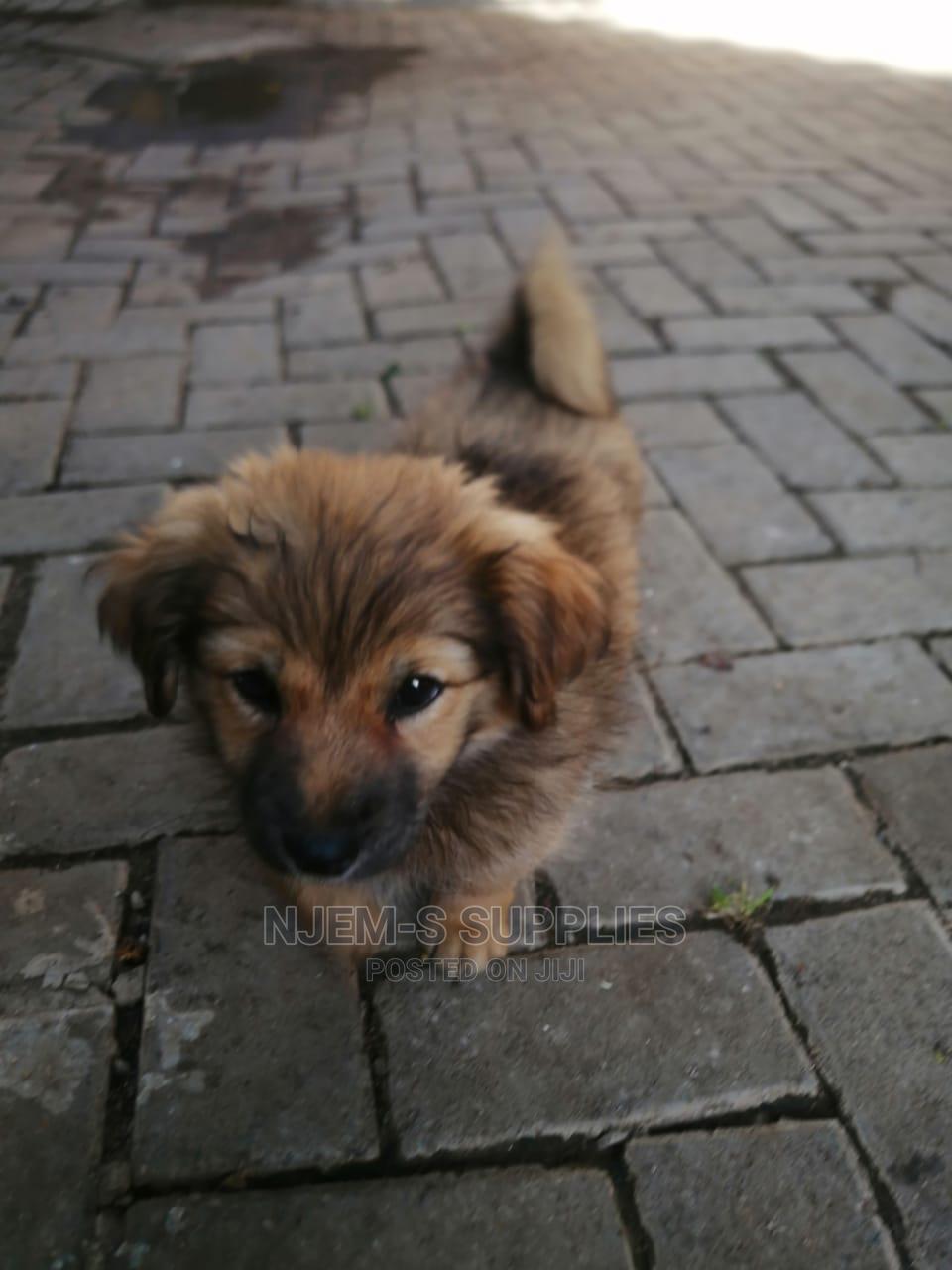 6-12 Month Female Mixed Breed German Shepherd