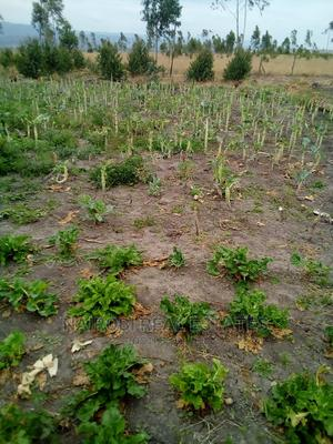 Crop Share/Joint Venture on 3 Acres - 15km From Joska   Land & Plots for Rent for sale in Athi River, Lukenya