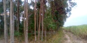1/2 Acr With Tress | Land & Plots For Sale for sale in Bungoma, West Nalondo
