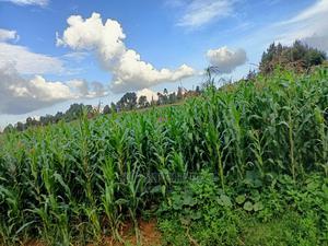 Plot for Sale in Kspseret Kericho Ndogo Behind Unity Eldoret | Land & Plots For Sale for sale in Kapseret, Langas