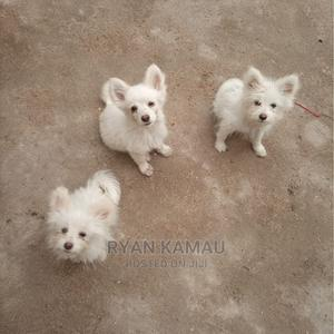 6-12 Month Female Mixed Breed Japanese Spitz | Dogs & Puppies for sale in Nairobi, Dagoretti