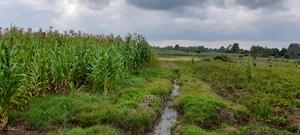 6.2acres of Very Fertile Land   Land & Plots For Sale for sale in Kesses, Cheptiret