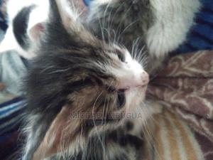 1-3 Month Male Mixed Breed Cat | Cats & Kittens for sale in Nairobi, Thome