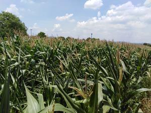 6.5 Acres Kitale (Moisbridge) | Land & Plots For Sale for sale in Trans-Nzoia, Kitale