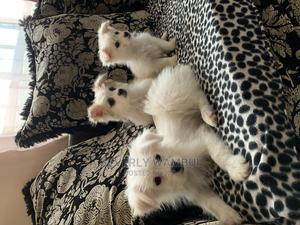 3-6 Month Female Mixed Breed Japanese Spitz | Dogs & Puppies for sale in Nairobi, Utawala