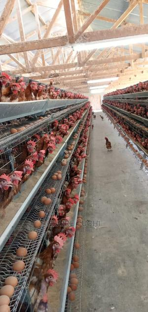 Poultry Cages | Farm Machinery & Equipment for sale in Nairobi, Utalii