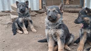 3-6 month Female Purebred German Shepherd   Dogs & Puppies for sale in Nakuru, London