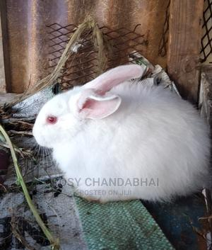 Rabbit Male or Female | Other Animals for sale in Mombasa, Mvita
