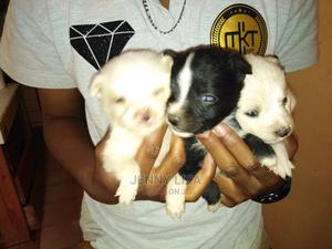 0-1 Month Female Mixed Breed Japanese Spitz | Dogs & Puppies for sale in Nairobi, Roysambu