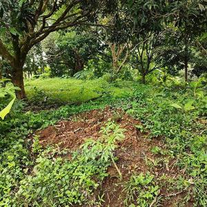 32 Acres Nyahururu (Ngobit) | Land & Plots For Sale for sale in Laikipia Central, Ngobit