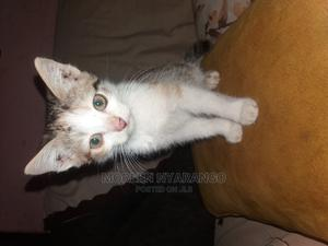 3-6 Month Female Mixed Breed Mongrel (No Breed) | Cats & Kittens for sale in Nairobi, Kayole