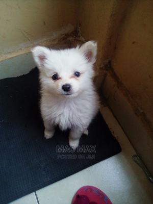 1-3 Month Male Mixed Breed Maltese   Dogs & Puppies for sale in Nairobi, Roysambu