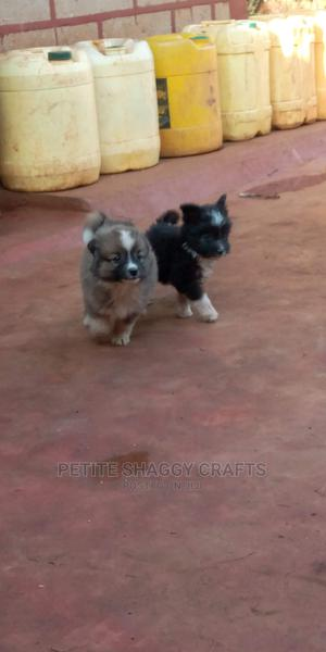 1-3 Month Female Mixed Breed Maltese | Dogs & Puppies for sale in Nairobi, Nairobi Central