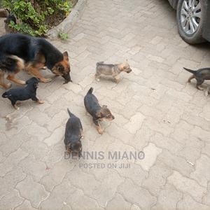 0-1 Month Female Mixed Breed German Shepherd | Dogs & Puppies for sale in Nairobi, Embakasi