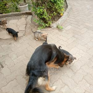 1-3 Month Female Mixed Breed German Shepherd | Dogs & Puppies for sale in Nairobi, Nairobi Central