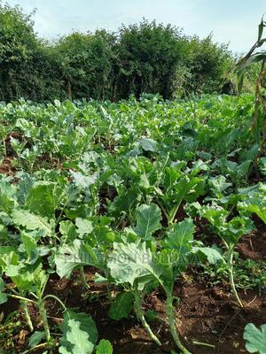 0.9 Acres of Land for Sale in Naitiri Lungai. | Land & Plots For Sale for sale in Bungoma, Tongaren